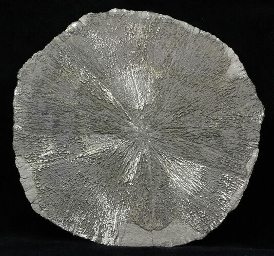 "Large 5"" Pyrite Sun - Illinois"